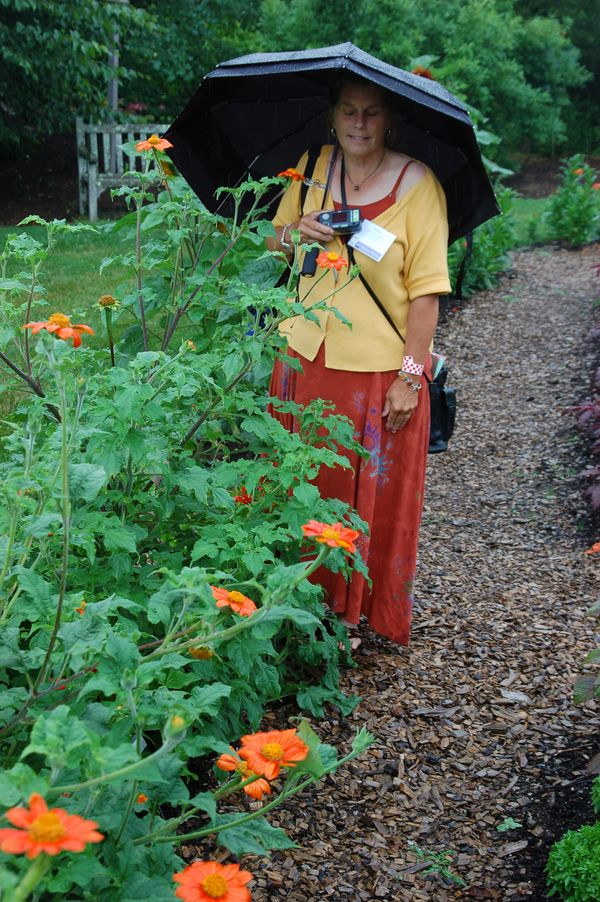 Ledge and Gardens: Mexican Sunflower - Tithonia