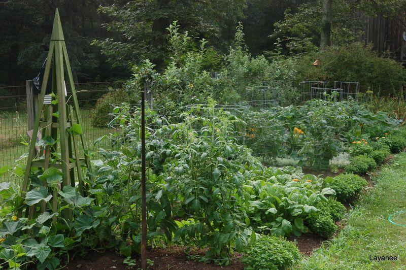 Garden in summer