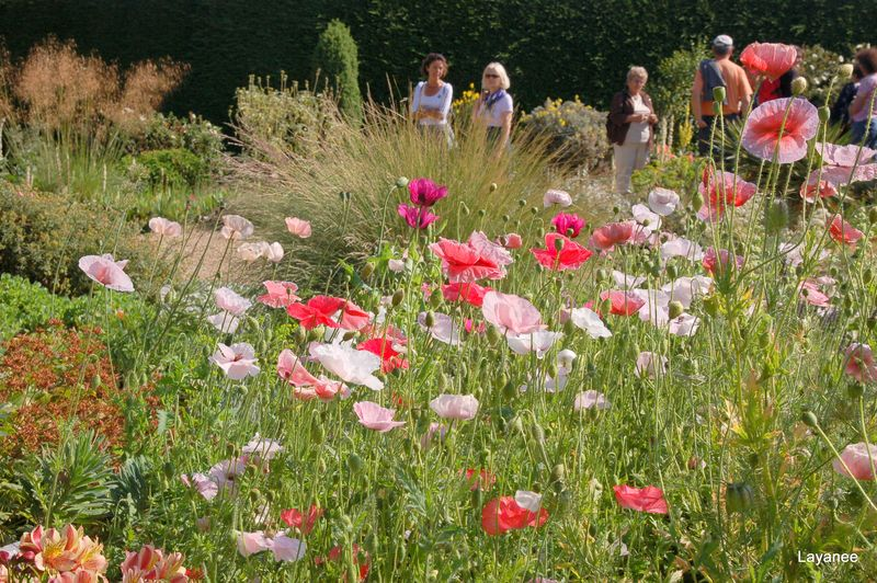 Beth Chatto's dry garden- poppies