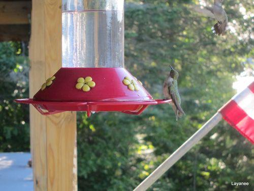 Two hummingbirds