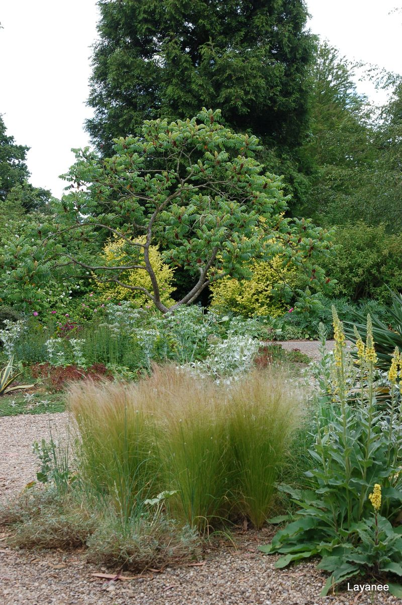 Beth Chatto Cry Garden