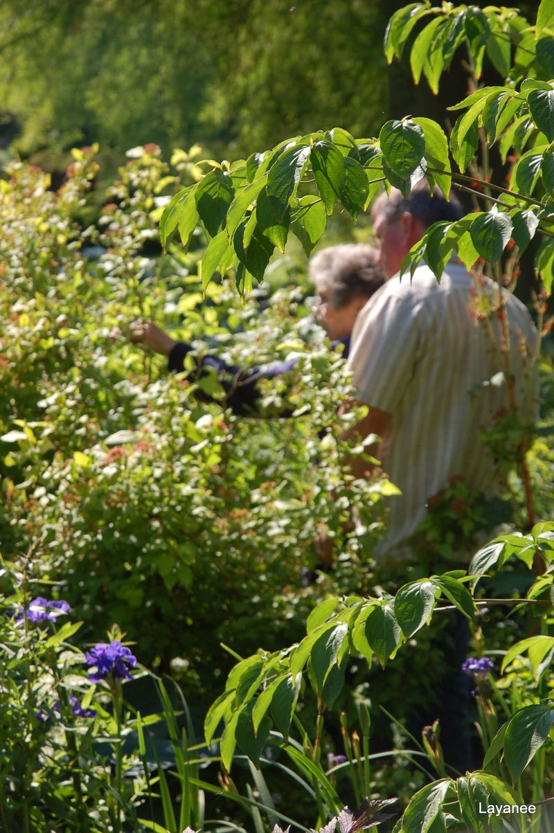 Beth Chatto pruning instructions