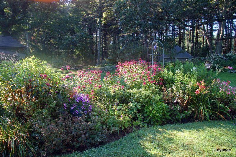 Monarda didyma in lhm garden