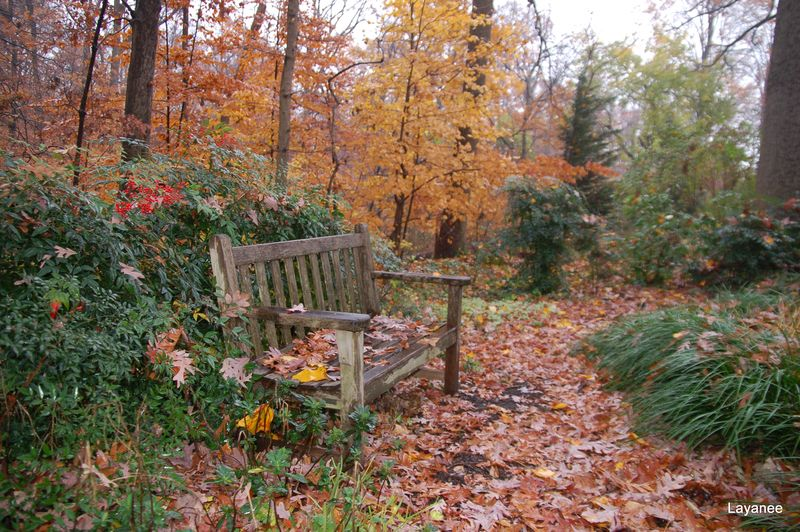 Contemplative bench in the Susan Harris garden