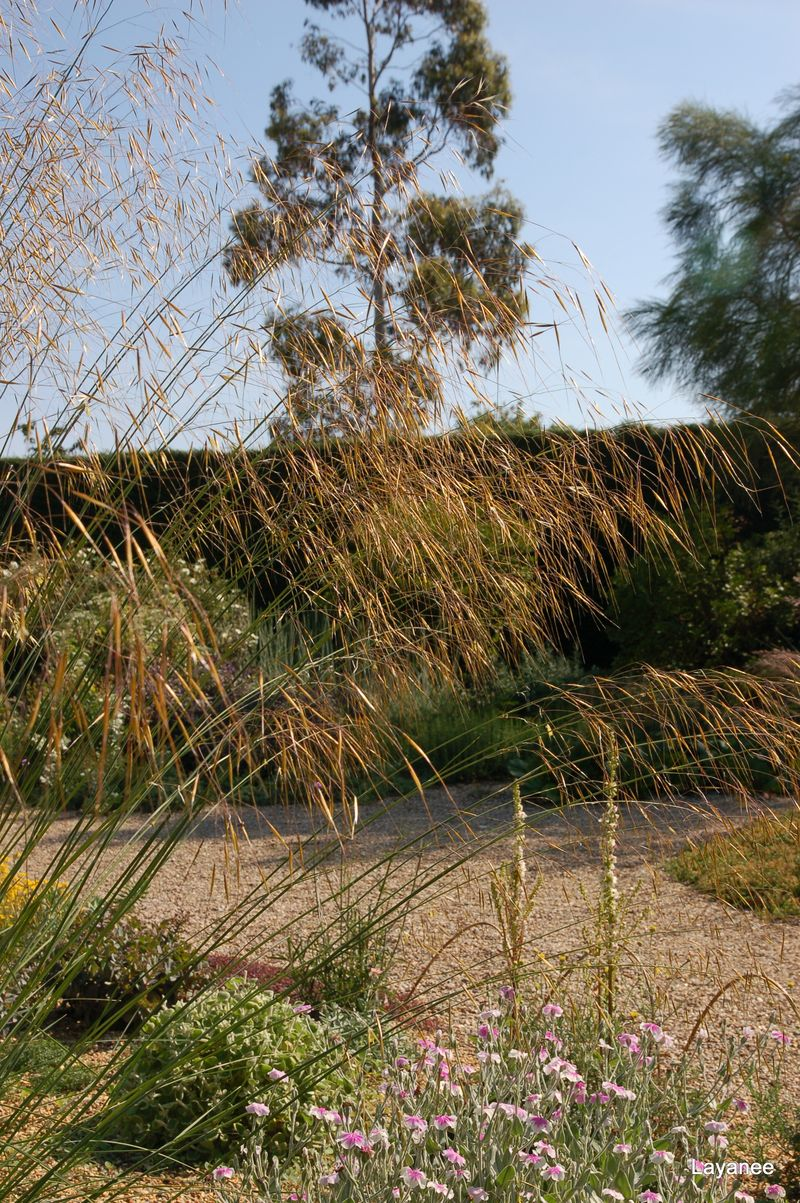 Beth Chatto - Grass in dry garden