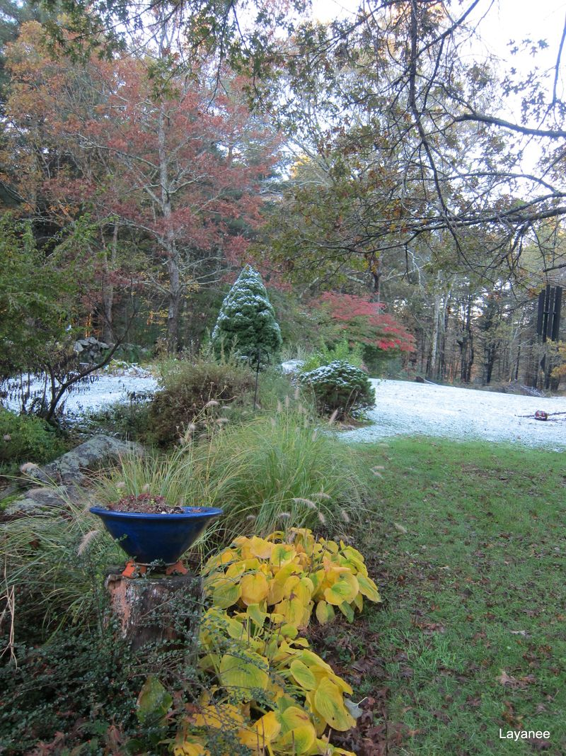 Oct. 28th snow in the garden