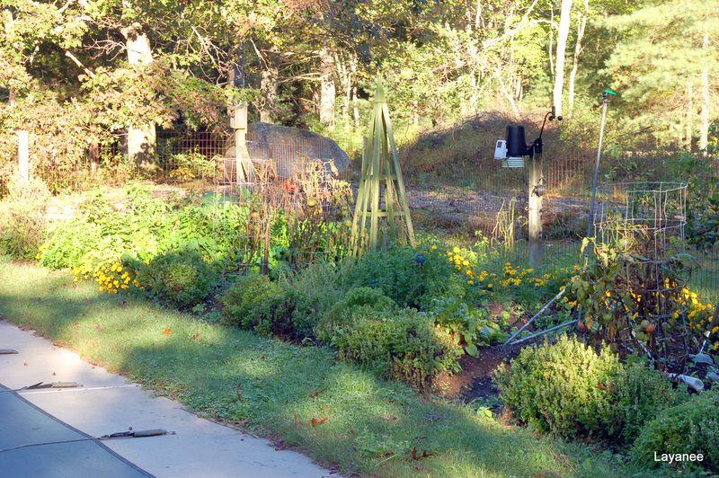 Veg garden 10