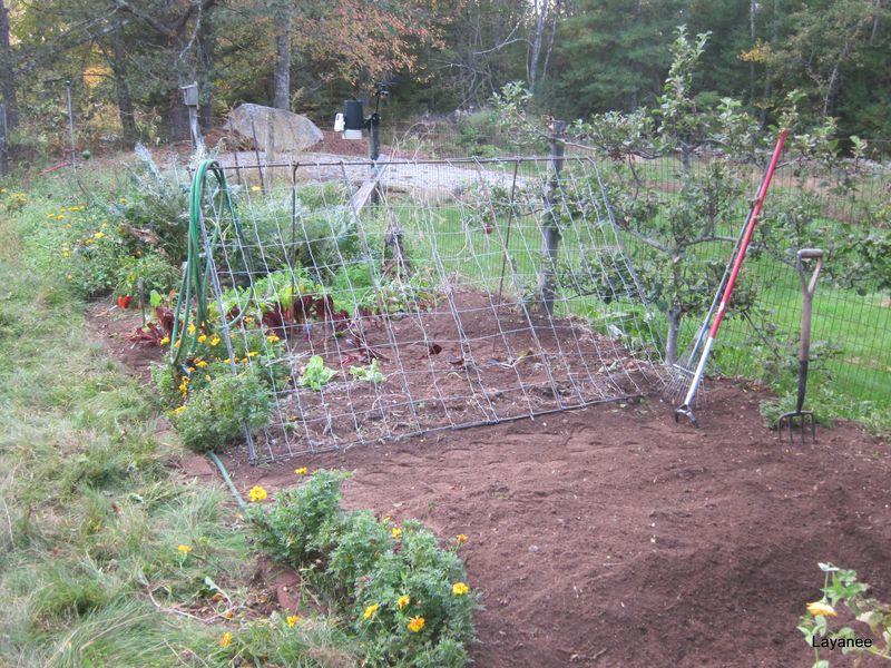 Clean garden bed