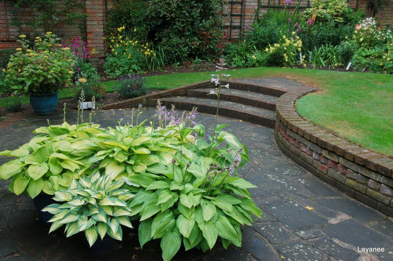 Container hosta on patio Orchard Cottage