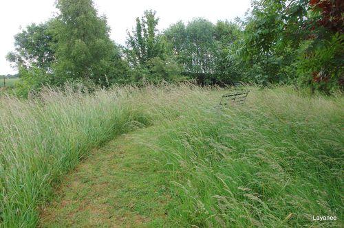 Grassy knoll - Layanee