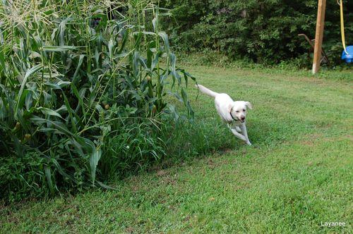 Cooper running