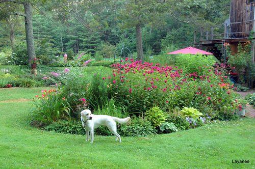 Cooper in front of the Left Handed Mitten Garden