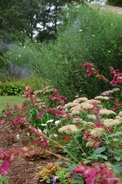 Sedum and salvia