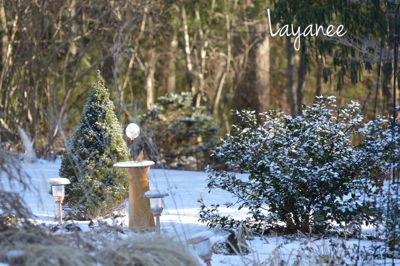 Light snow on holly
