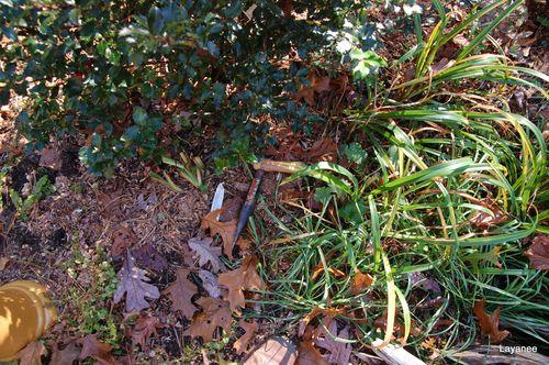 Dibble in the garden