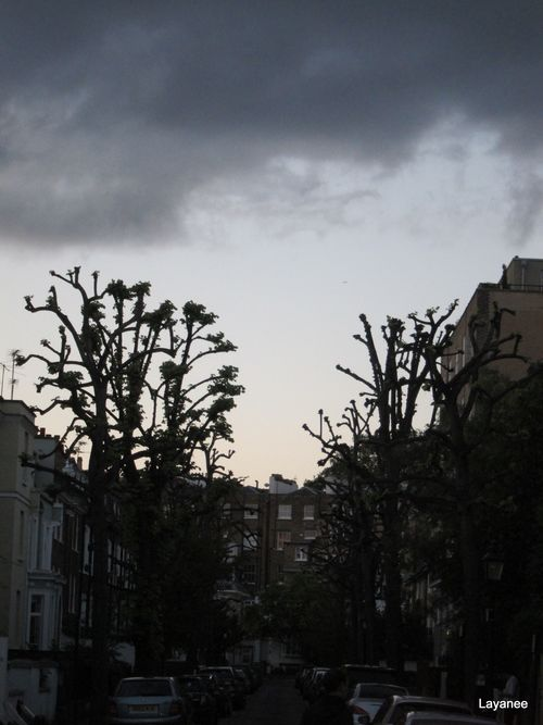 Pollarded Trees - London