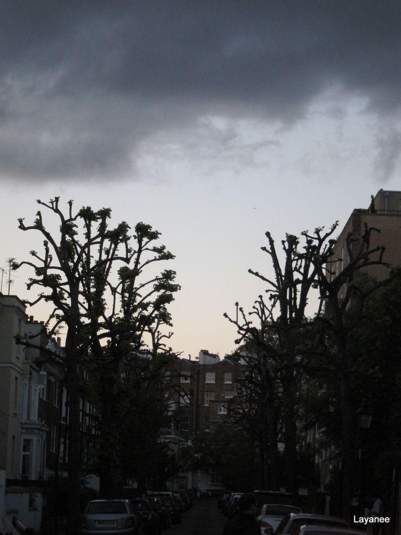 Pollarded Trees - London