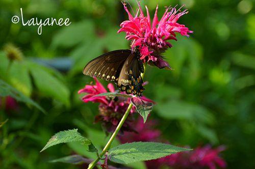 DSC_0024-Butterfly
