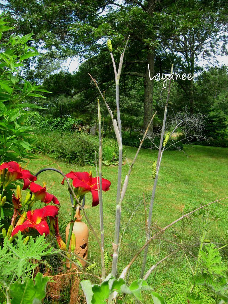 IMG_1287-six monarch caterpillars