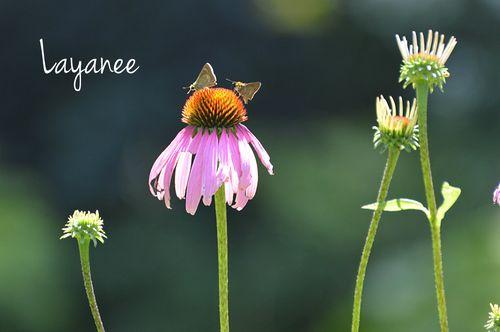 DSC_0014-little butterflies