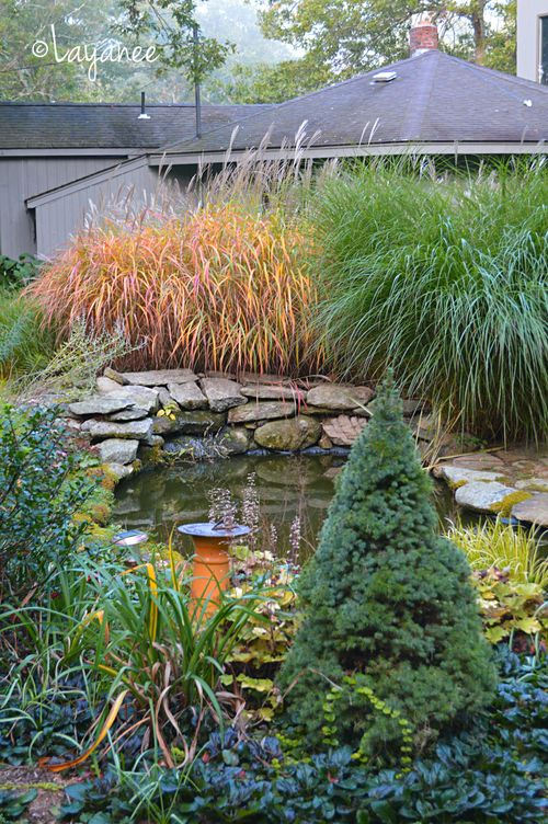 Fishpond with Miscanthus s. purpurescens