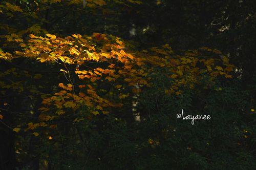 Bough autumn color