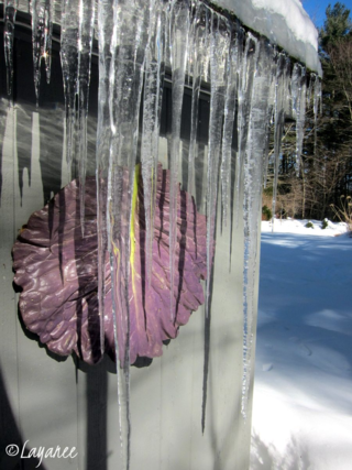 Icicle cabbage leaf