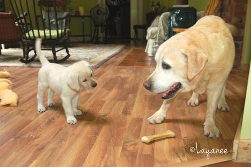 Cooper meets tucker 1