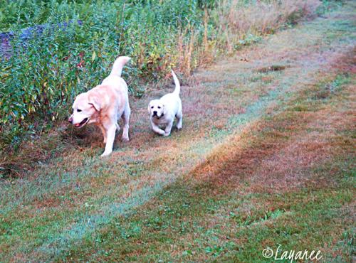 Tucker and Cooper 1