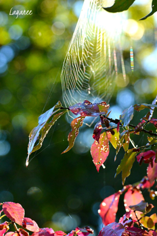 Spider web and euon
