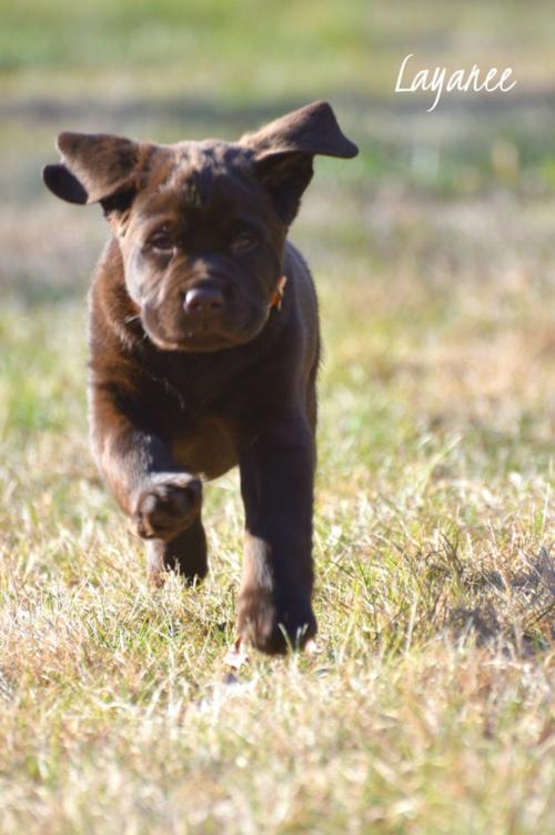 Gibbs running