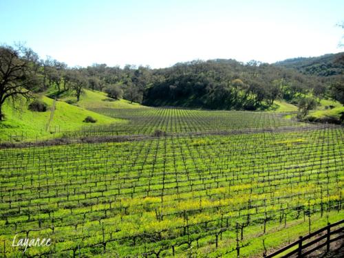 Jaxson Keys vineyard