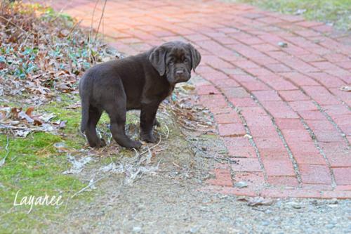 Gibbs on the walkway