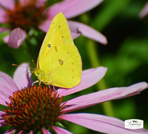 Bloomdaybutterfly