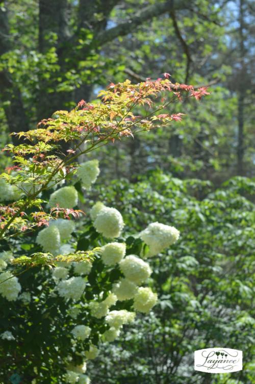 Bloomdaylimelight