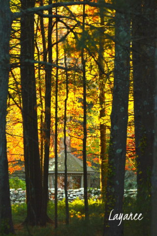 Gazebo in fall light