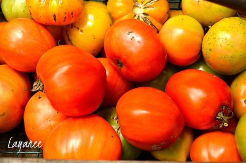 Tomatoes-last