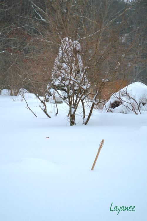 Yard stick