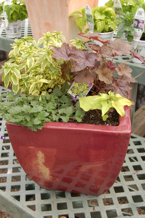 Perennial_and_herb_container