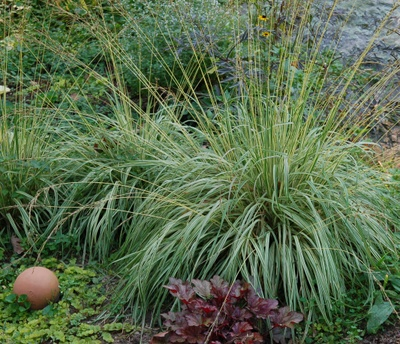 Yellow_grass_with_clay_ball_2