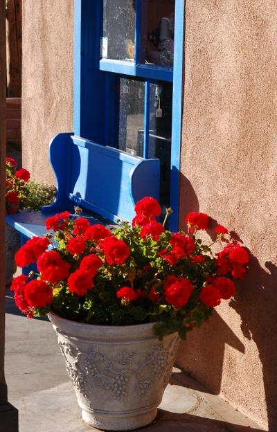 Red_geraniums